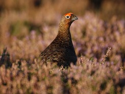 New wildlife partnership in Scotland