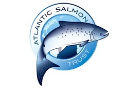 Wild salmon numbers crash