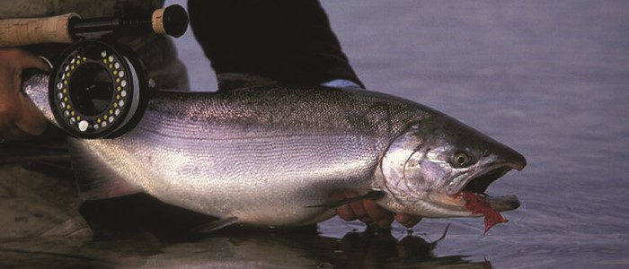 New steelhead footage from Boundary Lodge, British Columbia