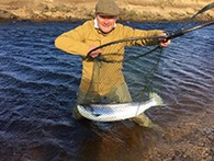 Scottish salmon season gets off to a great start
