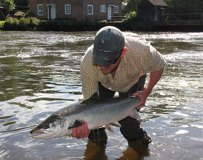 Salmon within a short drive of London