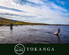 Yokanga River: Breaking News