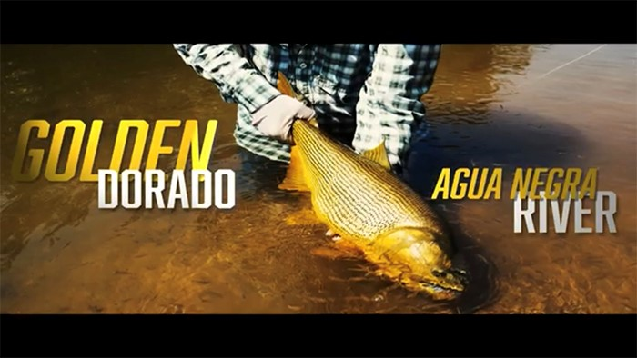 Good friend and client Paul P on why he loves the Golden Dorado