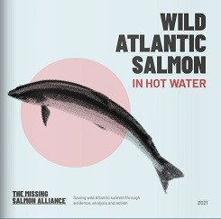 The Missing Salmon Alliance